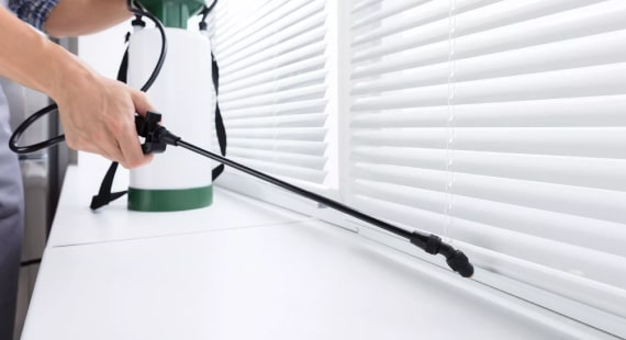 Best Pest Control Services In Bellevue Hill