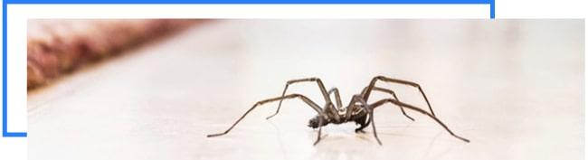 Same Day Pest Control Melbourne